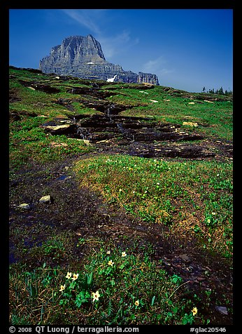 Stream at hanging gardens, Logan pass. Glacier National Park (color)