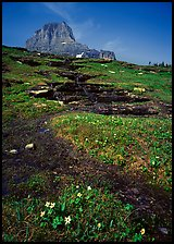 Stream at hanging gardens, Logan pass. Glacier National Park, Montana, USA. (color)
