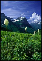 Beargrass, Mount Oberlin, and Cannon Mountain. Glacier National Park, Montana, USA.