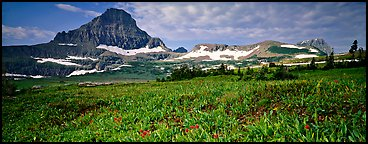 Alpine landscape with wildflower meadows and peak. Glacier National Park (Panoramic color)