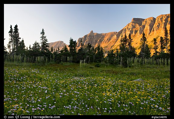 Meadow with wildflowers and Garden Wall at sunset. Glacier National Park (color)