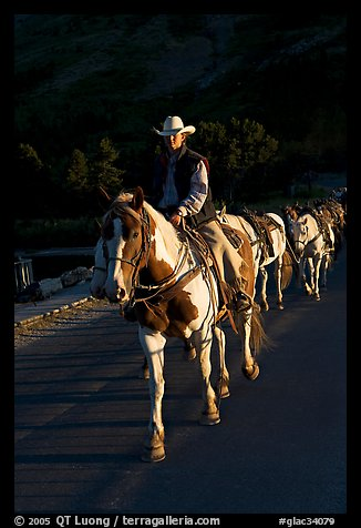Man leading horse pack, sunrise. Glacier National Park (color)