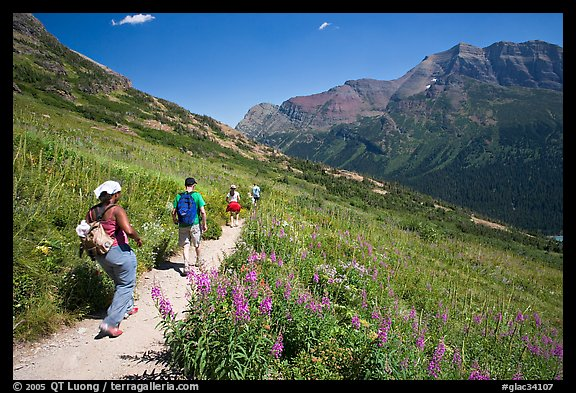 Group hiking on the Grinnell Glacier trail. Glacier National Park (color)