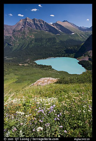 Wildflowers high above Grinnel Lake, with Allen Mountain in the background. Glacier National Park (color)