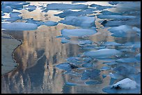 Blue icebergs floating on reflections of rock wall, Upper Grinnel Lake, late afternoon. Glacier National Park, Montana, USA. (color)