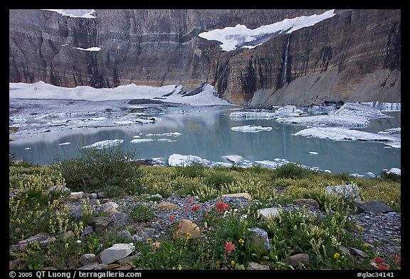 Wildflowers, Upper Grinnell Lake, Salamander Falls and Glacier. Glacier National Park, Montana, USA.