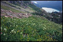 Bear Grass, Grinnell Lake and Josephine Lake. Glacier National Park, Montana, USA. (color)