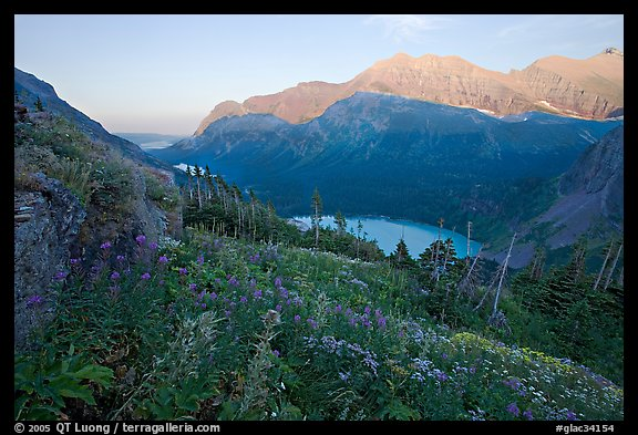 Alpine wildflowers, Grinnell Lake, and Allen Mountain, sunset. Glacier National Park (color)