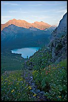 Alpine wildflowers and stream, Grinnell Lake, and Allen Mountain, sunset. Glacier National Park, Montana, USA.