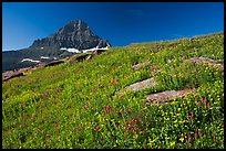 Alpine wildflowers and Reynolds Mountain, Logan Pass, morning. Glacier National Park, Montana, USA. (color)