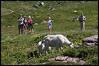 Hikers watching mountains goats near Logan Pass. Glacier National Park, Montana, USA. (color)