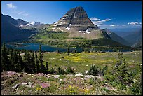 Meadows with alpine wildflowers, Hidden Lake and Bearhat Mountain behind. Glacier National Park, Montana, USA.