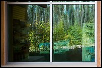 Forest, Apgar visitor center window reflexion. Glacier National Park ( color)