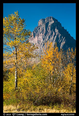 Autumn foliage and Rising Wolf Mountain. Glacier National Park (color)