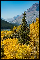Autumn color, Rising Wolf Mountain. Glacier National Park ( color)
