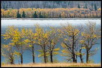Trees in autumn foliage on both shores of Saint Mary Lake. Glacier National Park ( color)