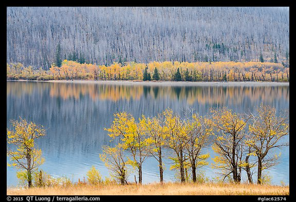 Trees in autumn foliage, burned forest, and reflections, Saint Mary Lake. Glacier National Park, Montana, USA.
