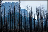 Burned forest from 2015 wildfire and peaks. Glacier National Park ( color)