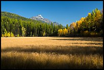 Shadows in autumn meadow. Glacier National Park ( color)