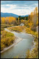 Autumn foliage along the North Fork of Flathead River. Glacier National Park, Montana, USA.
