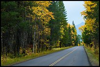 Road in autum near West Glacier. Glacier National Park ( color)