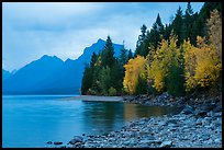 Trees in autumn color and Lake McDonald. Glacier National Park, Montana, USA.