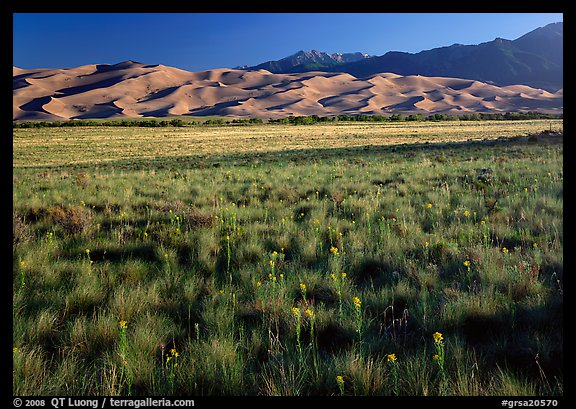 Wildflowers, grass prairie and dunes. Great Sand Dunes National Park and Preserve (color)