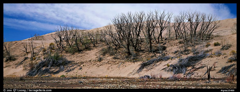 Dune edge with dead trees. Great Sand Dunes National Park and Preserve (color)