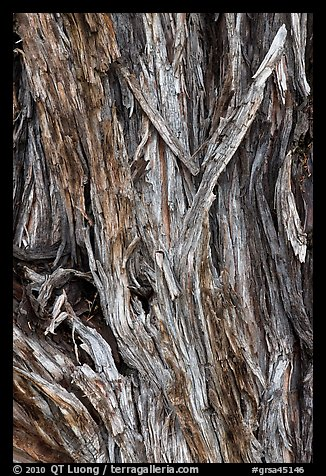 Bark detail of Pinyon pine trunk. Great Sand Dunes National Park and Preserve (color)