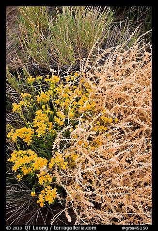 Closeup of shrubs. Great Sand Dunes National Park and Preserve (color)