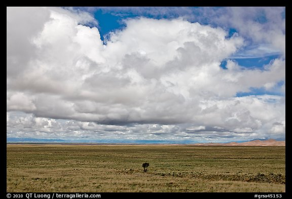 Solitary tree on prairie below cloud. Great Sand Dunes National Park and Preserve (color)
