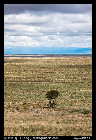 Lone tree and flatland. Great Sand Dunes National Park and Preserve (color)