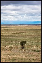 Lone tree and flatland. Great Sand Dunes National Park and Preserve ( color)