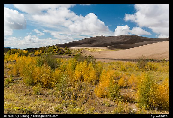 Riparian habitat along Medano Creek in autumn. Great Sand Dunes National Park and Preserve (color)
