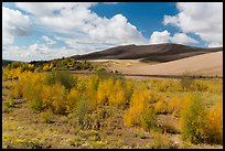 Riparian habitat along Medano Creek in autumn. Great Sand Dunes National Park and Preserve ( color)