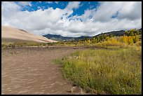 Grasses, patterns in sand of Medano Creek, sand dunes in autumn. Great Sand Dunes National Park and Preserve ( color)