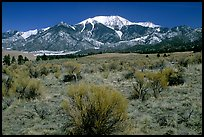 Desert-like sagebrush and snowy Sangre de Cristo Mountains. Great Sand Dunes National Park and Preserve, Colorado, USA.