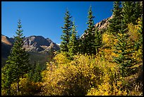 Autum foliage and Music Mountain. Great Sand Dunes National Park and Preserve ( color)