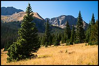 Subalpine meadow in Sand Creek Valley. Great Sand Dunes National Park and Preserve ( color)
