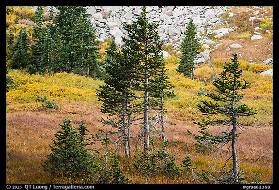 Fir trees, srubs in autumn color, and talus. Great Sand Dunes National Park and Preserve (color)