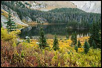 Autumn vegetation and alpine lake, Lower Sand Creek Lake. Great Sand Dunes National Park and Preserve ( color)