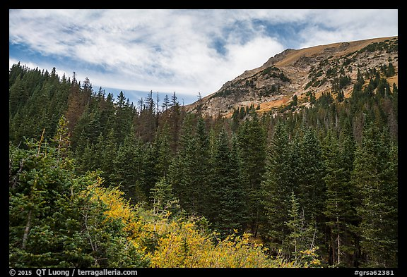 Peak rising above fir forest. Great Sand Dunes National Park and Preserve (color)