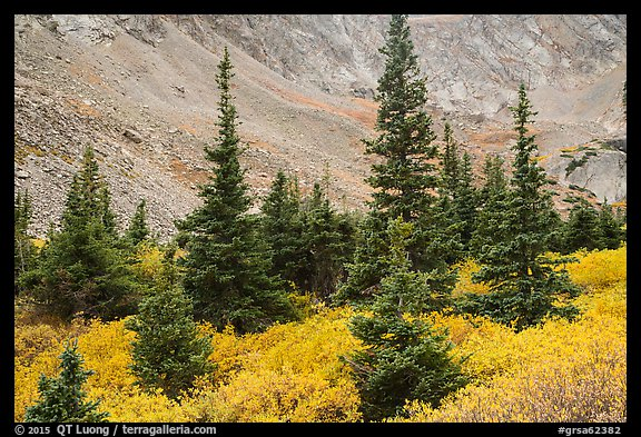 Firs, shrubs in autumn color, and rocky slopes. Great Sand Dunes National Park and Preserve (color)