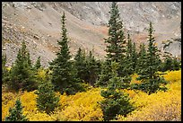 Firs, shrubs in autumn color, and rocky slopes. Great Sand Dunes National Park and Preserve ( color)
