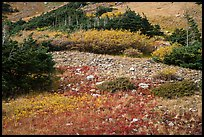 Alpine meadows in autumn. Great Sand Dunes National Park and Preserve ( color)