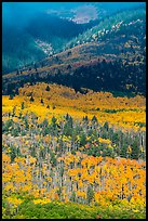 Slopes below Mt Herard with trees in autum color. Great Sand Dunes National Park and Preserve ( color)