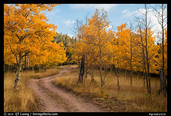 Gravel road through trees in autumn foliage, Medano Pass. Great Sand Dunes National Park and Preserve (color)