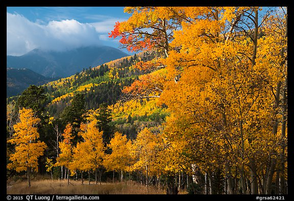Autumn foliage and mountains near Medano Pass. Great Sand Dunes National Park and Preserve (color)