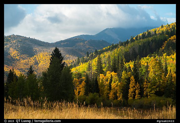 Hills covered with trees in autumn foliage near Medano Pass. Great Sand Dunes National Park and Preserve (color)