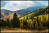 Hills covered with trees in autumn foliage near Medano Pass. Great Sand Dunes National Park and Preserve ( color)